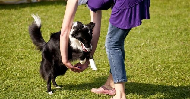 pratique de dog dancing