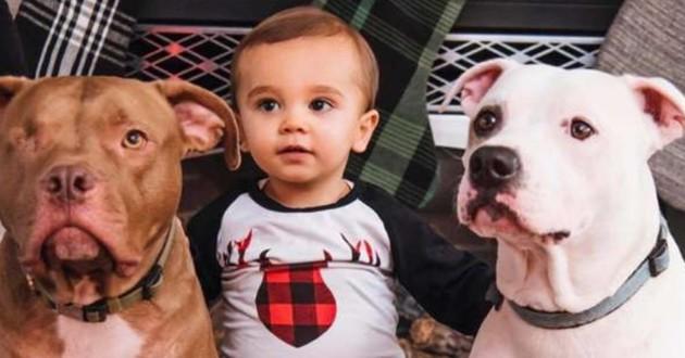 Dawson et ses deux chiens