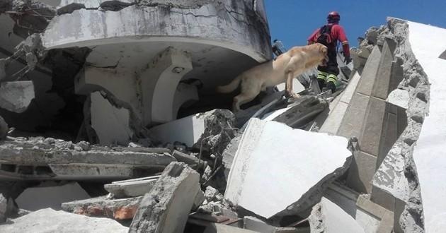 Dayko chien héros