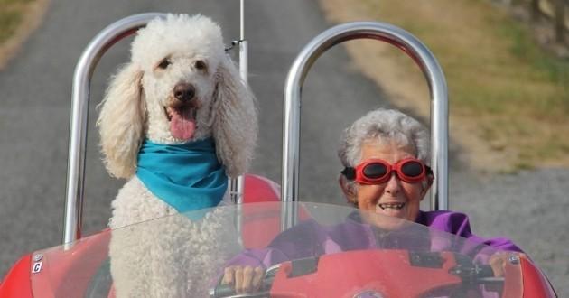 Driving Miss Norma et Ringo le caniche