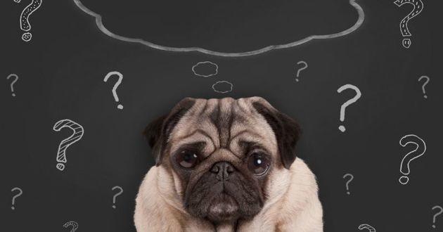 un chien peut-être atteint de démence