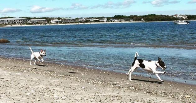 sato project dead dog beach