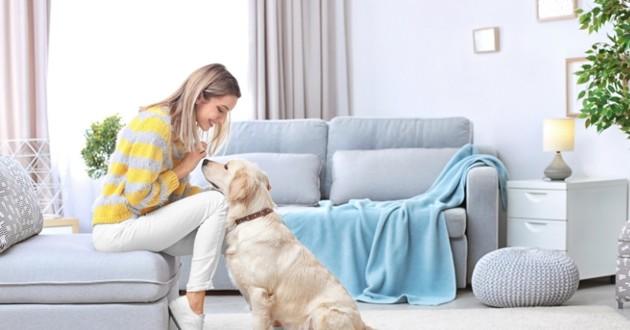 chien dans son salon
