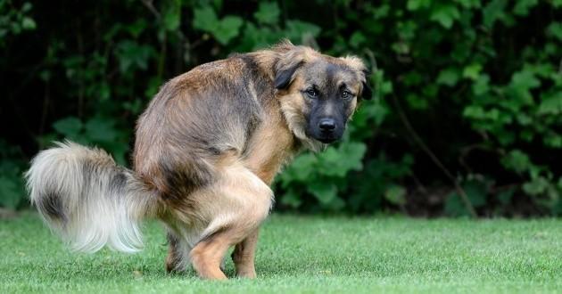 Lutte contre les déjections canines