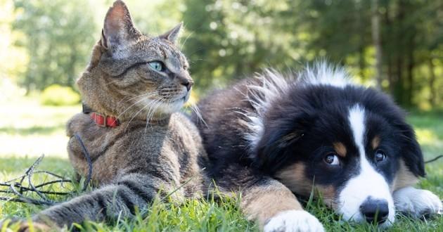 Chien et chat dans l'herbe repos