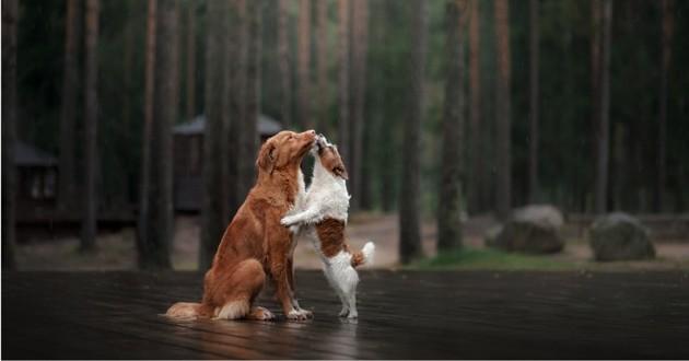 deux chiens qui s'aiment et se font des bisous