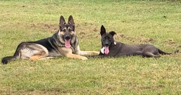 deux chiens dans un jardin