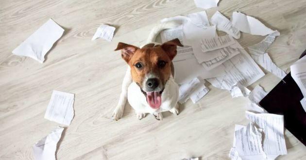 chien ayant déchiré des papiers