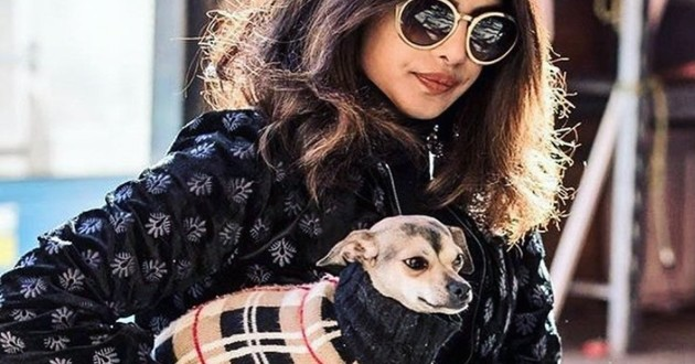 priyanka chopra et sa chienne
