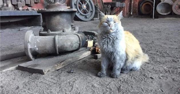 un chat qui vit dans une gare ferroviaire