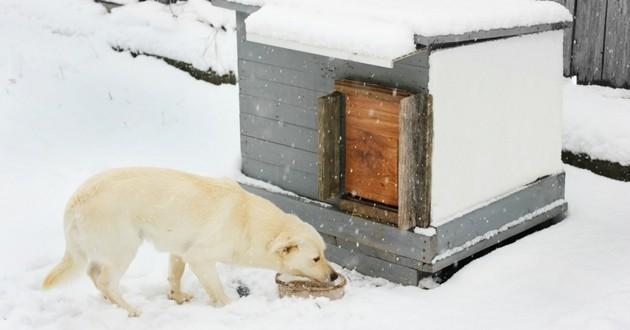 chien niche hiver froid