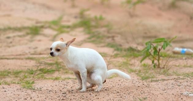 chien crottes déjections