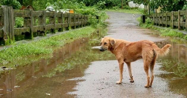 chien pluie inde