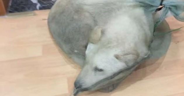 chien sauvé viande chine