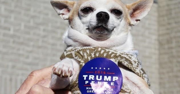 Chien pour Donald Trump