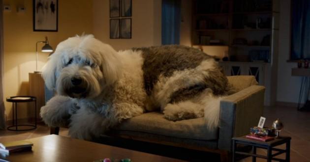Doug the dog / Skoda