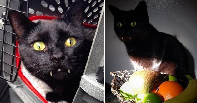 chat noir vampire