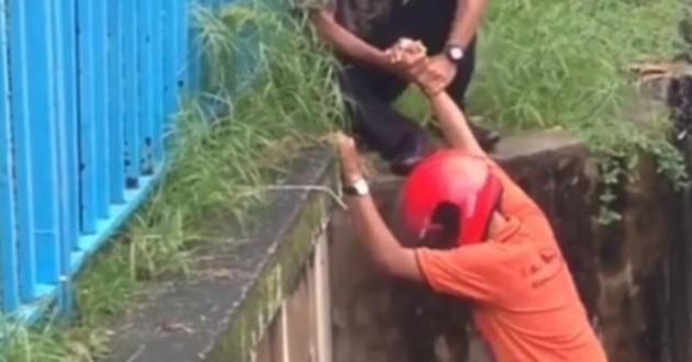 chaton sauvé malaisie