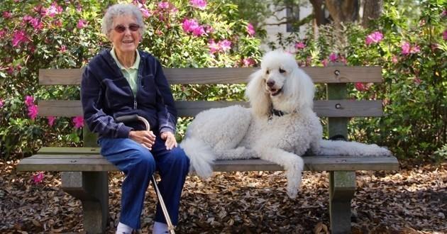 A 90 ans elle refuse son traitement contre le cancer et part en road trip avec son chien