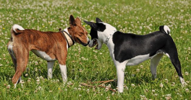 Deux chiens qui se recontrent