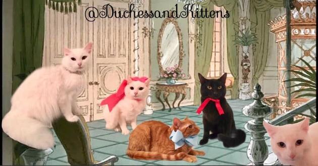 Duchess et ses chatons