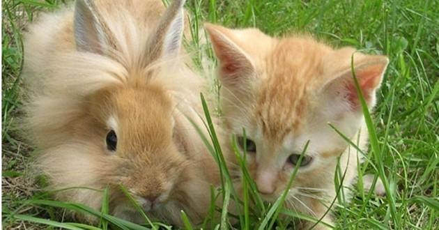 Chaton et lapins qui se ressemblent