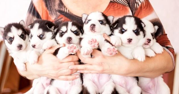 Illustration d'un élevage de chien