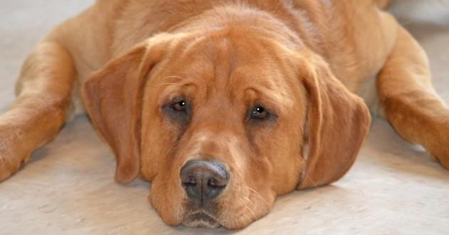 Eastwood chien refuge