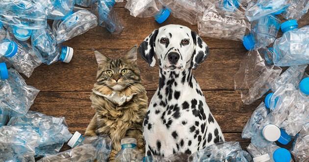 chien chat écologie