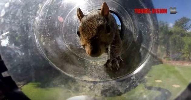 un écureuil qui fait une course à obstacles