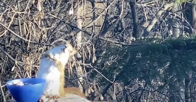 un écureuil ivre