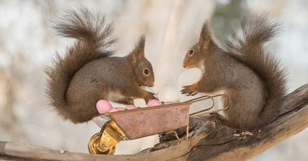 écureuils paques