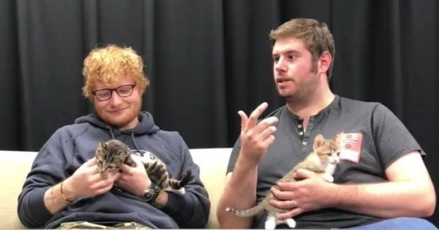 ed sheeran chaton