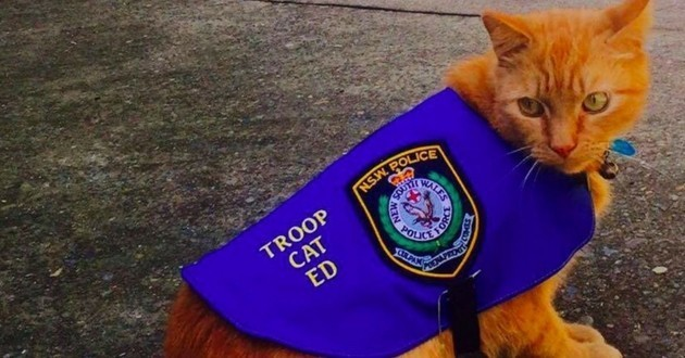 Ed le chat errant devenu policier