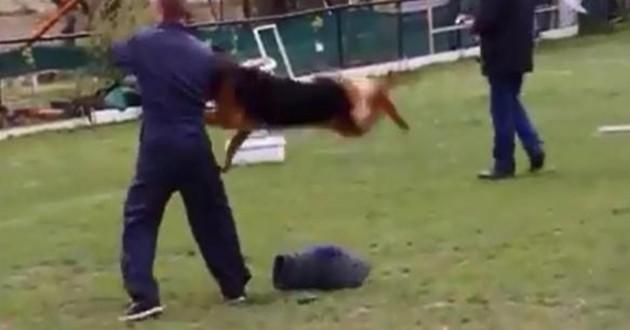 Educateur canin maltraite chien