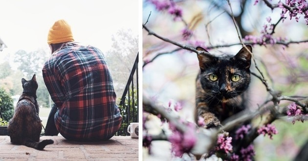 Eevee le chat aventurier
