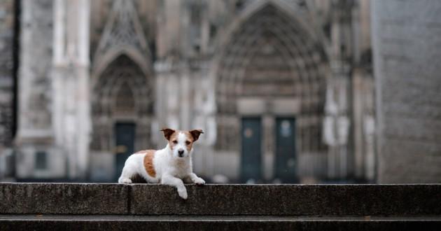 un chien allongé devant une église