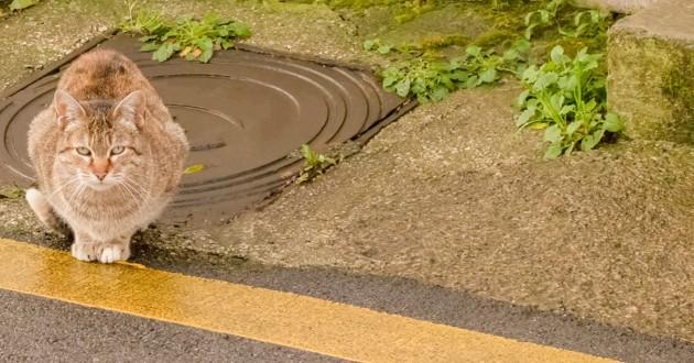 chat à côté d'une bouche d'égout
