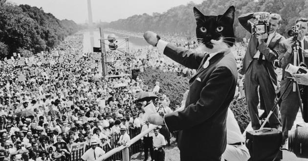 un chat candidat aux elections legislatives moldaves