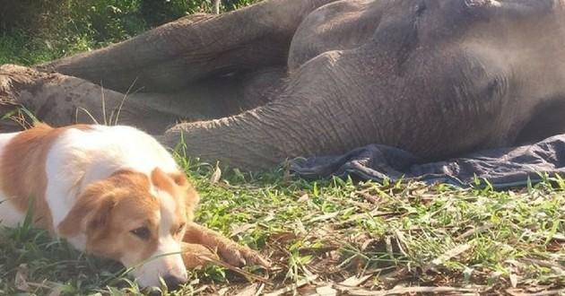 chien éléphant