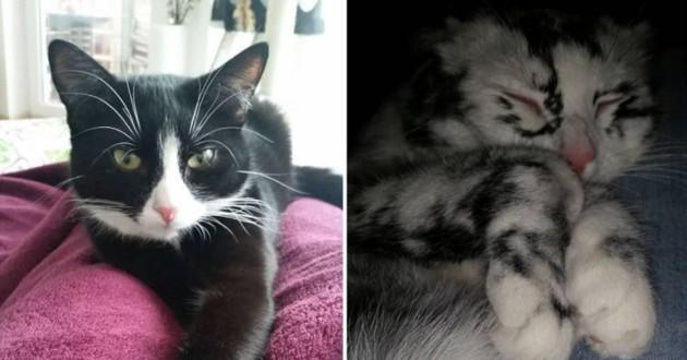 Elli le chat avant et après sa transformation