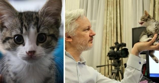 le nouveau chaton de Julian Assange