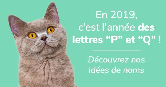nom de chat en P et Q en 2019
