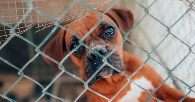 chien dans un enclos de refuge