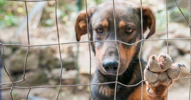 chien dans un enclos
