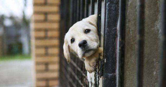 chien dans un enclos dans un refuge