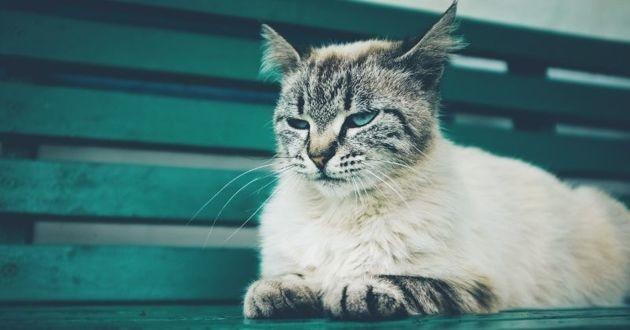 chat blasé