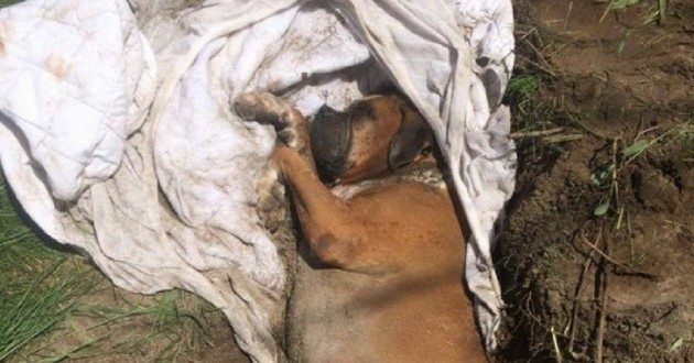 chien enterré vivant