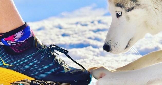 le chien sportif