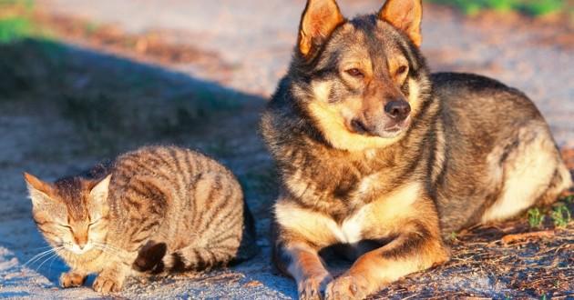 chat et chien errant